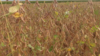 Supporting soybean industry opportunities