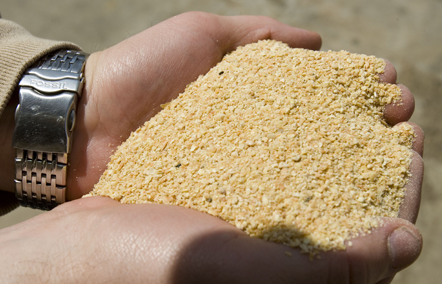 Soybean meal and Mexico