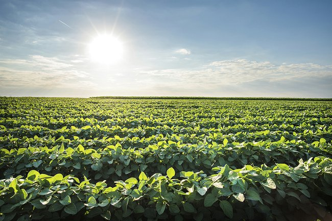 Consider making changes to build soybean yield