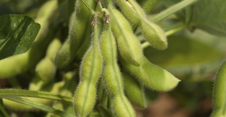 Contest helps soybean growers build yield