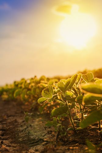 Soybeans contribute $8 billion to Missouri economy