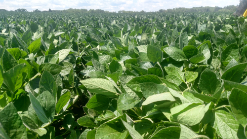 Ag statistics: 2017 a record soybean year in Missouri