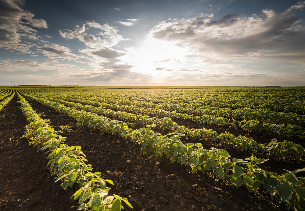 Missouri Soybean Yield Contest has special awards for triple-digits.