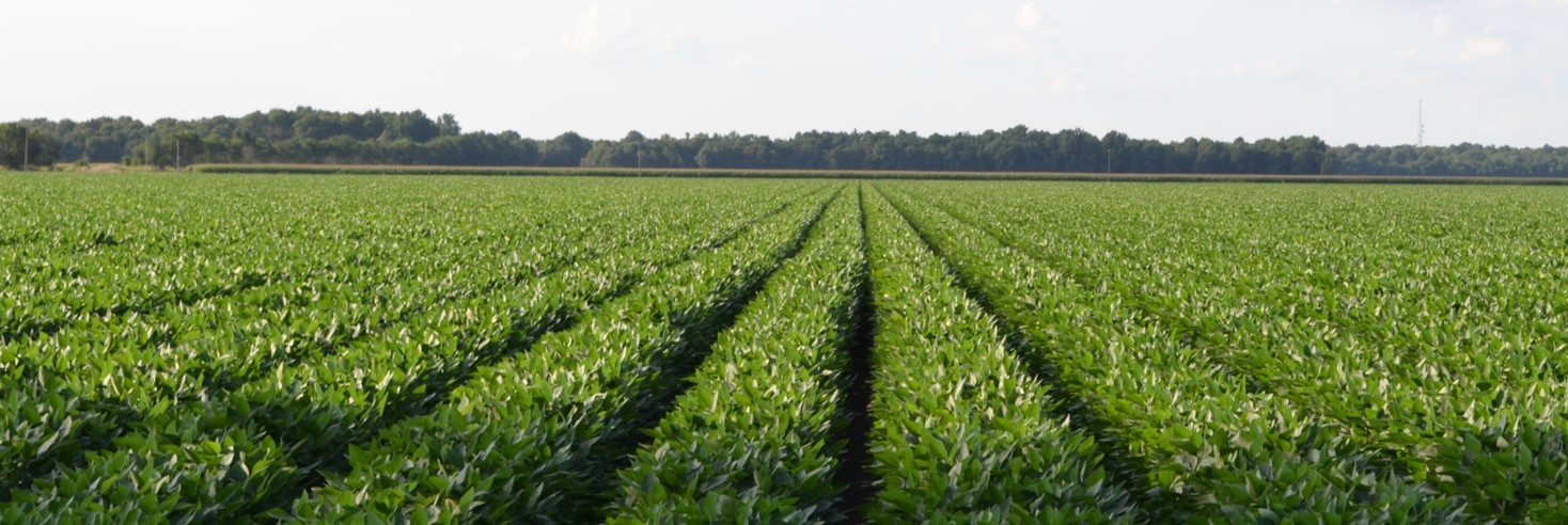 In-house soybean breeding and licensing brings benefits to Missouri farmers