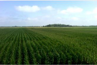 Cover crops conserve soil for next generation