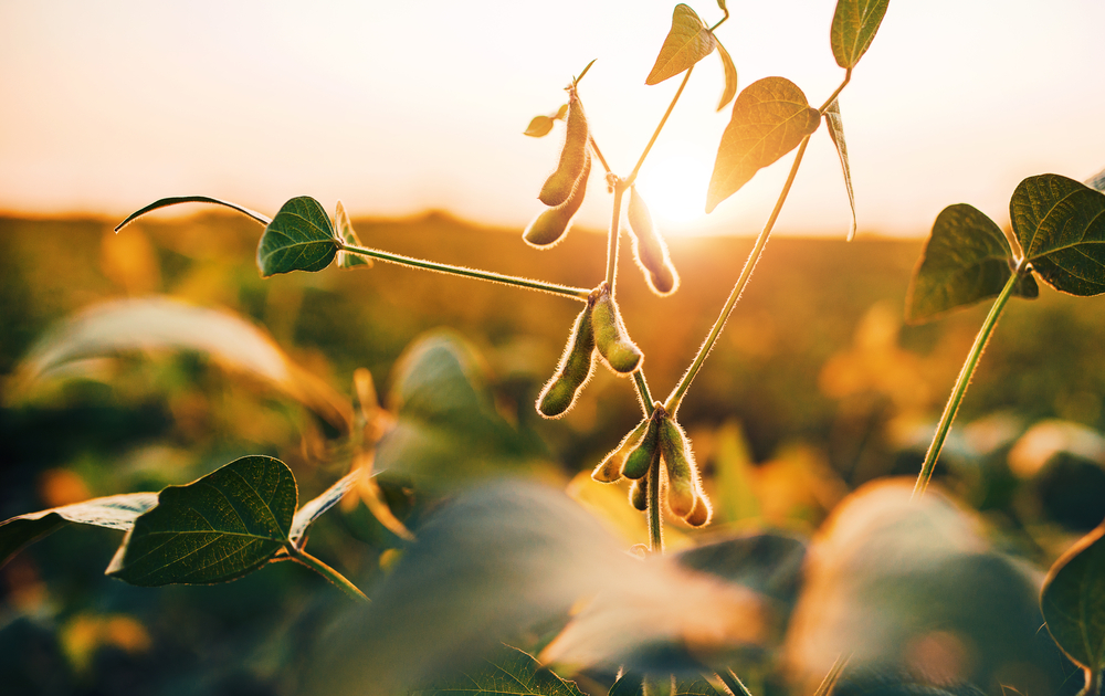 Missouri's best yielding 2018 soybeans are non-irrigated