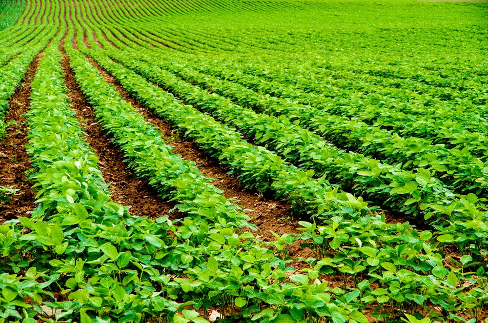 Missouri soybean acreage has grown
