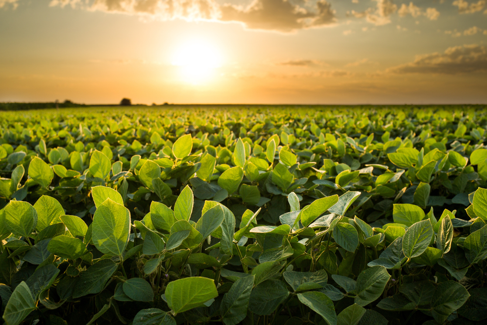 Soybean Yield Contest entry deadline extended