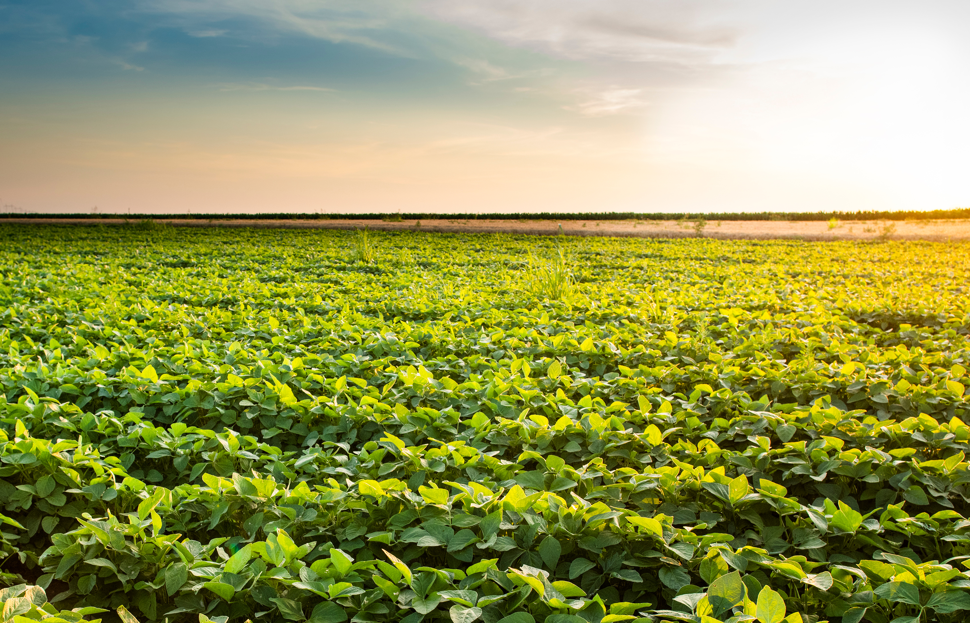 ROI study indicates Soybean Checkoff is a worthy investment