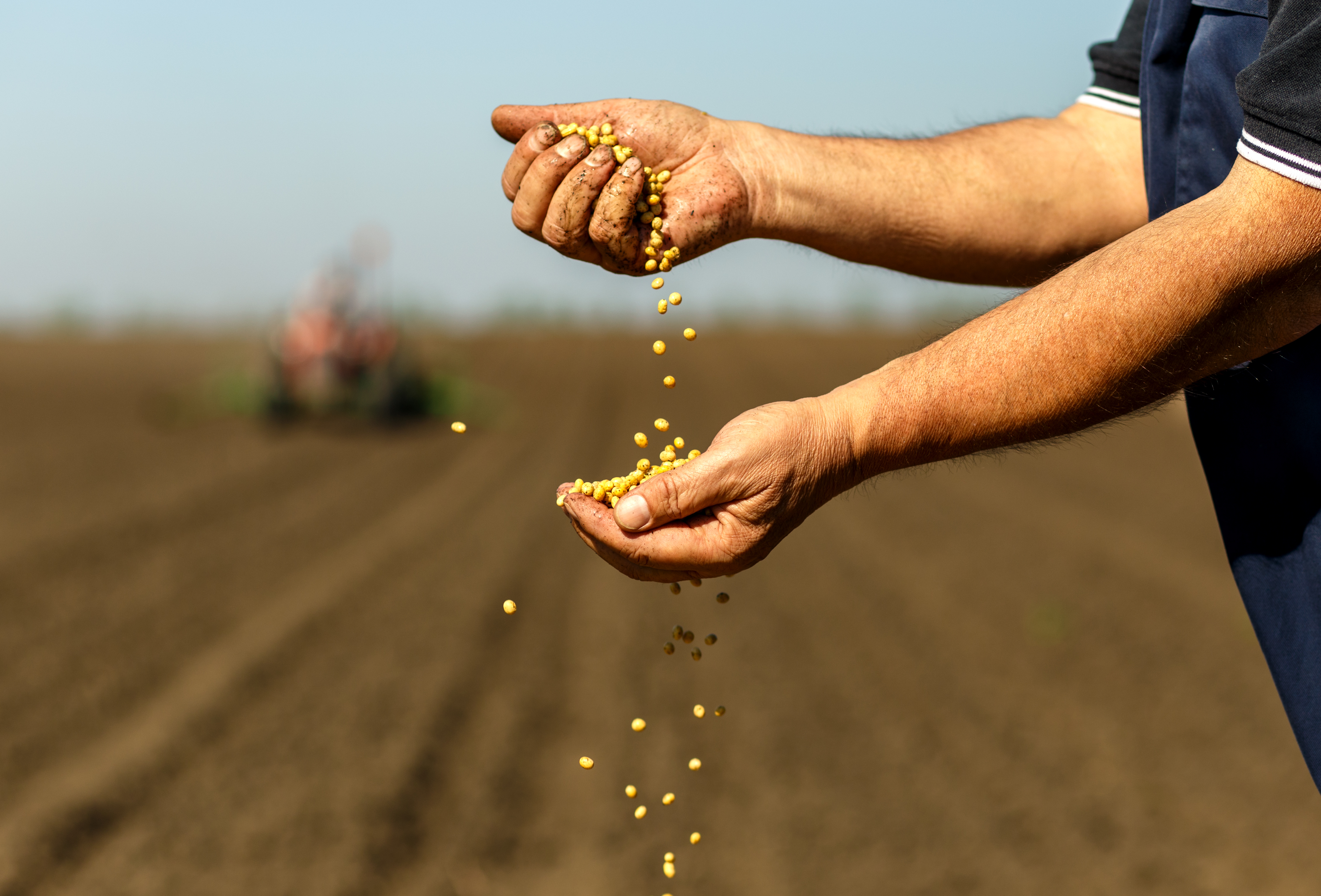 MSMC seeks proposals that enhance soybean profitability