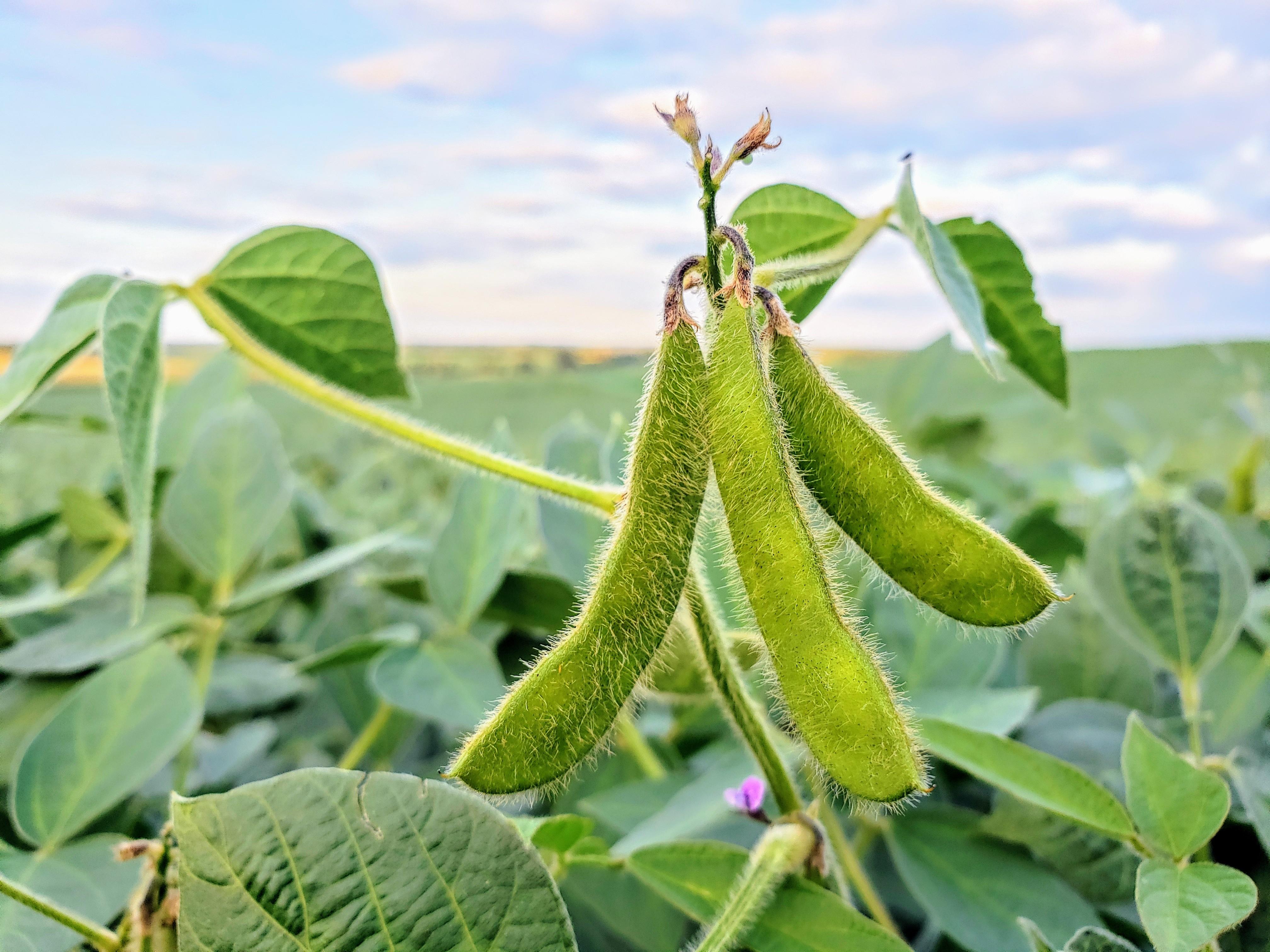 Yield contest winner tops 106 bushels per acre