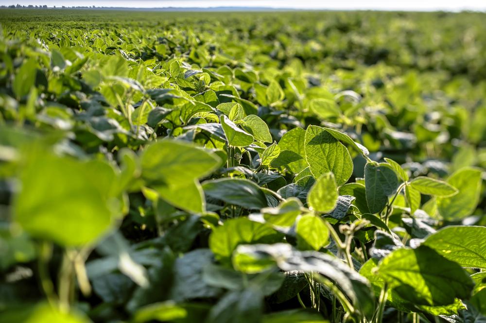 Scholarship winner's goal is optimizing soybean production