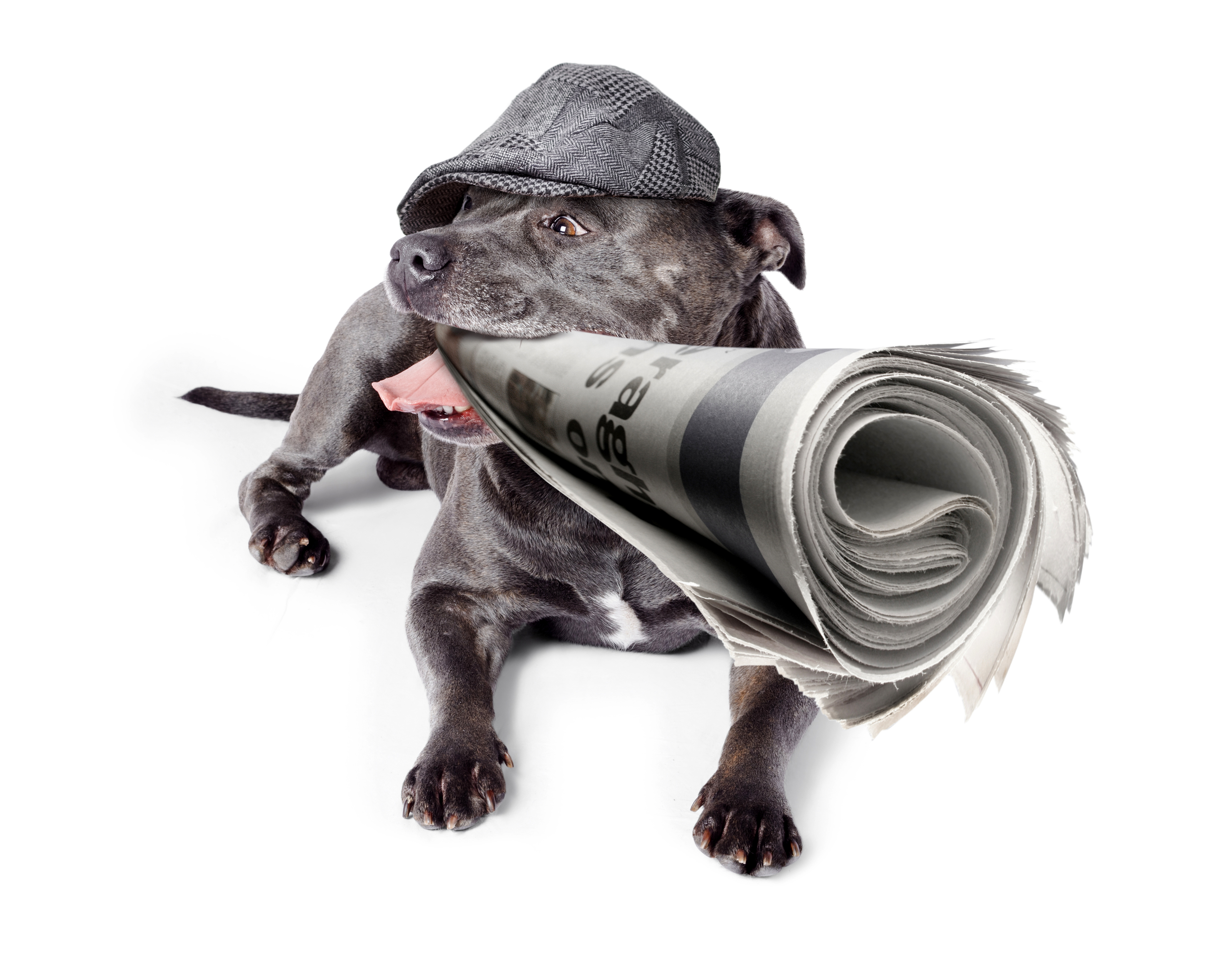 Original_dog_newspaper_dreamstime_xl_30578878