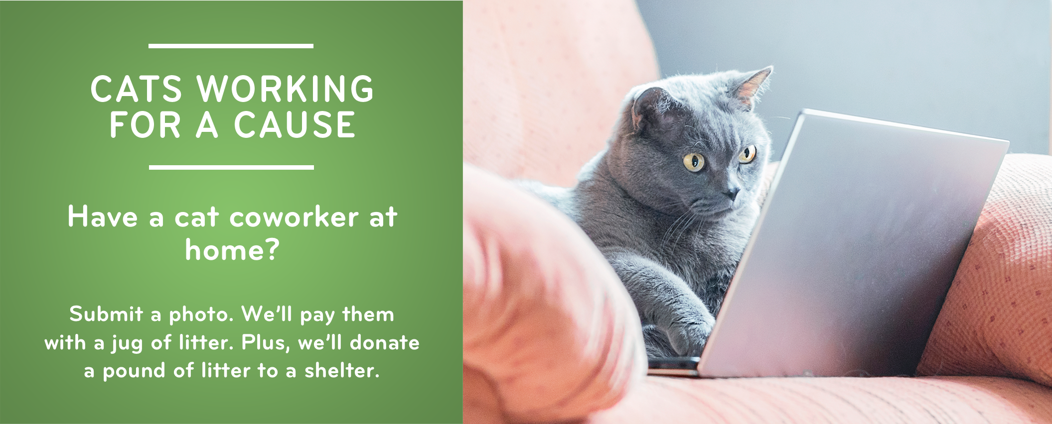 Cats Working for a Cause by Cat's Pride. Submit a photo of your cat coworker