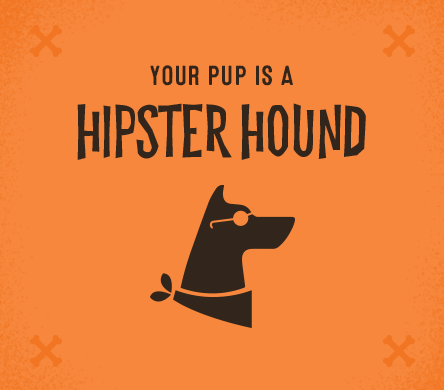 Your pup is a hipster hound.