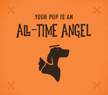 Your pup is an all-time angel.