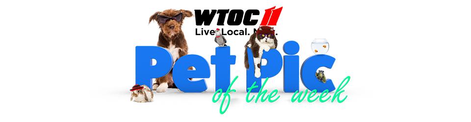 WTOC Pet Pics