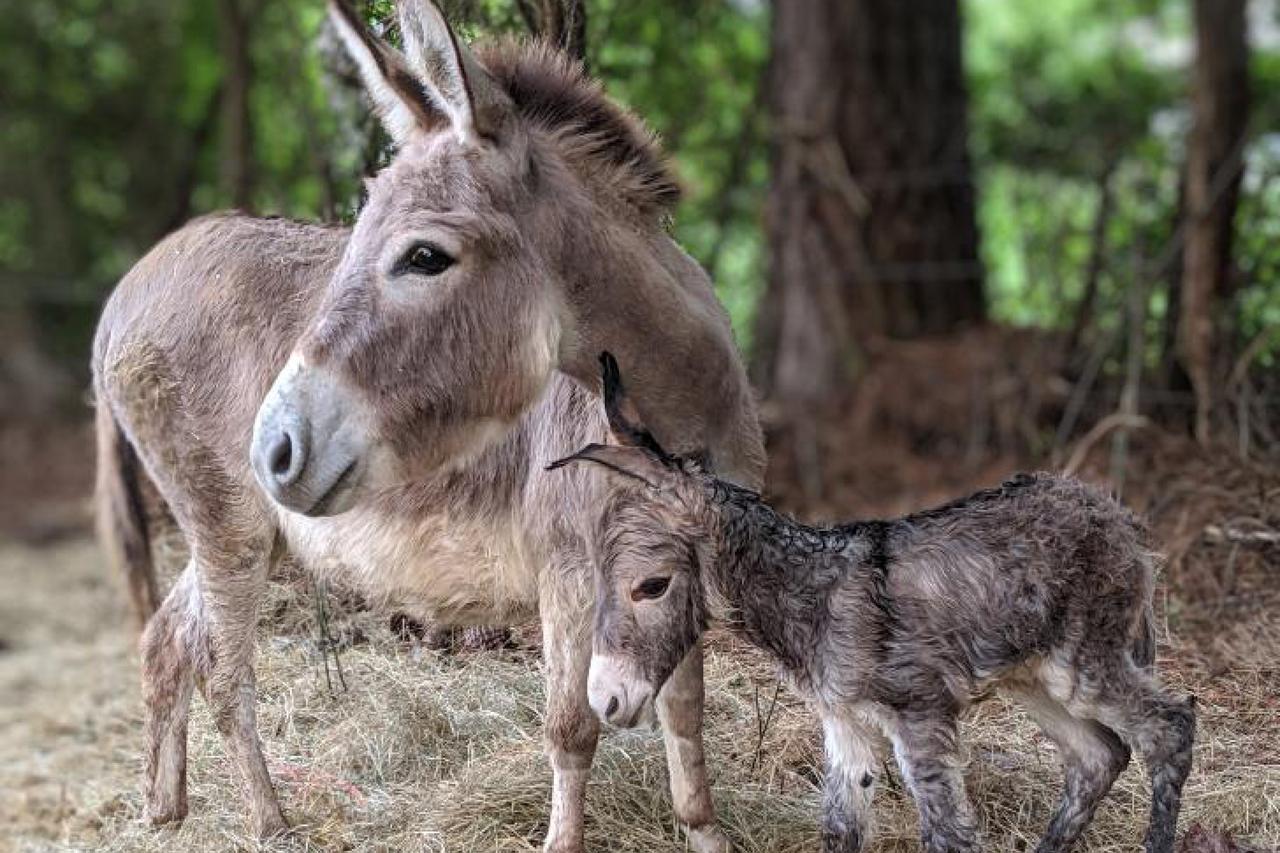 2nd-place-january-thats-a-dandy-donkey